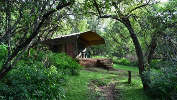 Ingwe-Bush-Camp